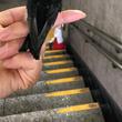 巣と間違えられた…? 通勤中のハプニングに驚き