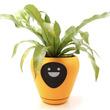 植物の気持ちを代弁! アイコンで水不足などをアピールするスマートプランター「Lua」