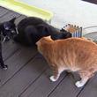お外の風って気持ちいいね!コール&マーマレード&大きくなった子猫ズ、初めてのお外を満喫する