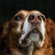 マイクロチップの代わりとなるか?犬の鼻を利用した生体認証システムが開発中