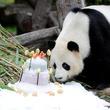 野菜のケーキで誕生日祝い、ベルリン動物園の雄パンダが9歳に