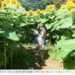 【アーツカウンシル東京】TURNフェス5関連企画「ヒマワリ迷路」開催のお知らせ