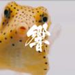 """海響館で暮らす生き物たち総勢""""約50種"""" が出演!世界初!?海の生き物たちの心音を使った楽曲「HEARTBEAT SEAPHONY」を公開"""