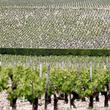 仏ワイン生産、今年は19%減の見通し 熱波など悪天候影響