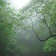 【漢詩の楽しみ】劍門道中遇微雨(剣門の道中にて微雨に遇う)
