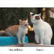 ネコの母子が相撲の稽古? 写真絵本『にゃんこ相撲』の写真展 西日暮里のギャラリーで開催