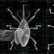佐藤卓×養老孟司、虫からデザインを学ぶ『虫展』開催