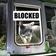 猫って贈り物が好きな生き物やから...動物の死骸を持ってきた猫の侵入を防ぐ猫用ドアが開発される