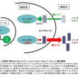 ライソゾーム病とパーキンソン病の共通分子を発見