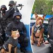 アメリカの警察、保護施設から引き取ったピットブルを訓練し、K9(警察犬)として活躍の場を与える取り組み