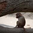 明王朝の奇妙な案件 猿の審判