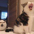 「後ろが気になる」「何アレ」 大あくびをする猫の写真に注目が集まる