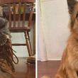 このお家に来てから3年後、同じブーツと一緒にはい!ポーズな犬に関する海外の反応