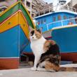 マルタの街中は赤トラ猫とマリア像がいっぱい
