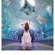 人気インスタグラマーの撮影写真が広告に マクセルアクアパーク品川「LIVE AQUA PARK」