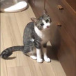 家具をかんで叱られた猫ちゃん、まさかの「あくびフェイント」を披露する