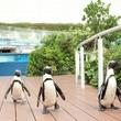 ペンギン・カワウソ・アロワナ・ドラドに加え、約300匹のガラ・ルファが競い合う!?水族館もスポーツの秋!「サンシャイン水族館 生き物たちのミニ運動会」