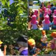 8月8日は「ブルーベリーの日」!「ブルーベリーで世界一を目指す目の総合健康企業」わかさ生活がブルーベリーの魅力を伝える活動