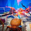 最強のカニを目指して戦う対戦アクション『カニノケンカ』の早期アクセス版リリース。『エース・オブ・シーフード』のnussoftの新作海産物ゲーム