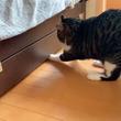 引き出しをガムテープで封鎖した飼い主 猫がとった行動に、8万人が驚愕!