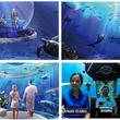 バルーン型潜水船で気軽な「海中旅行」を目指すクラウドファンディング、2021年の実現を目指す