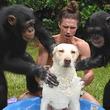 仲間に入れてほしい! チンパンジーが犬を洗う動画に77万人が大爆笑