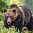 北海道のヒグマ駆除に、道外からクレームが殺到 「クマの怖さを知らないのか」と非難の声