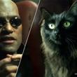 ハリウッド映画に自慢の愛猫を無理やり登場させるインスタグラムのアカウント