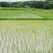 台風時「田んぼの様子見に行く」農家が続出する本当の理由が闇過ぎると話題に!