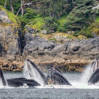 日本の捕鯨はクジラ保全最大の脅威ではない。ア…