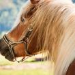 世の中の出会いは お別れ後の再会 〜 前世は一匹の馬 〜