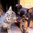 一匹の飼い犬と、運命の出会いをした野良の子猫。仲良しの2匹を見た飼い主が出した決断が優しかった(イタリア)