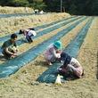 地域に根差した地域活性事業を目指して  GM7 丸森町で『農業生産事業』を9月から開始  ヒマワリ・リコリス・キャッサバを栽培
