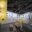 親子で楽しむ展覧会 徳島県の相生森林美術館で「とべ!とべ!ぺんぎんたち 齋藤槙えほん展」開催