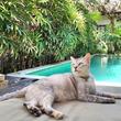 ホテルを探すなら猫付きで!猫が常駐する世界のホテルを紹介「Hotels With Cats (猫がいるホテル)」