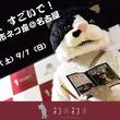 でらすごいで!ネコ市ネコ座@名古屋・むぎ(猫)は大盤振る舞いの2ステージ!BMKはネコ部を結成、猫好きっぷりを初披露!ホゴネコのことが学べるセミナーもありの猫愛濃いめな2日間!ステージプログラム解禁!