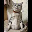 猫先生「みなさんが静かになるまで5分かかりま…