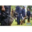 中国初のクローン警察犬が誕生―雲南省