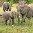 ゾウやサルも地球温暖化と戦っている。人間には真似できない方法で森林を保護(中央アフリカ・南米)