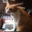「猫の街」神楽坂で見つけた猫好き必見スポット5選【現地ルポ】