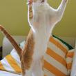 猫の破壊力、恐るべし たった1回のジャンプですべてをぶち壊す衝撃映像