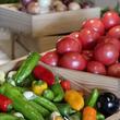 野菜の日(8月31日)は美味しくてヘルシーなお野菜をたっぷりいただきましょう!都内で行なわれる野菜イベント3つ