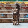 本日の美人猫vol.336