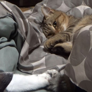 猫 しっぽ パタパタ