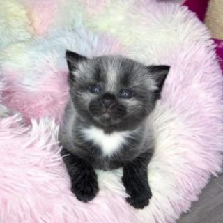 生後1日、体重82グラムで保護された銀色の子猫…