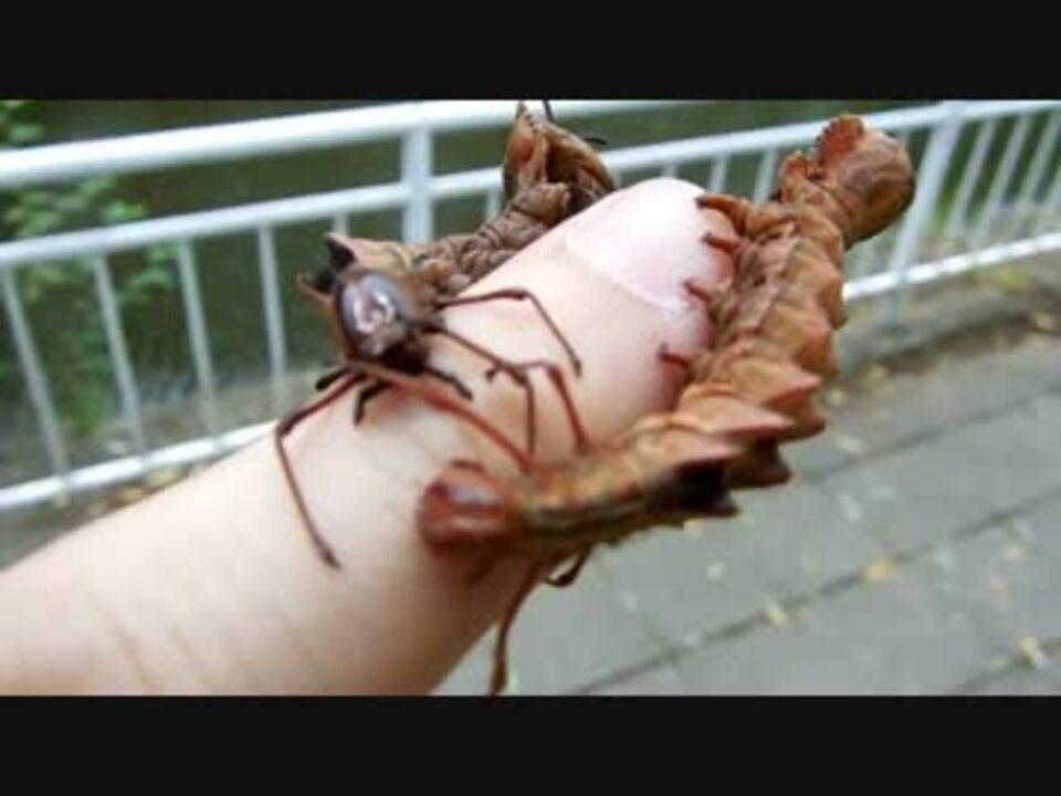 フランネル 成虫 サザン モス 最も危険な「ふさふさの猛毒ケムシ」がアメリカで異常発生! 緊急搬送される被害者が続出