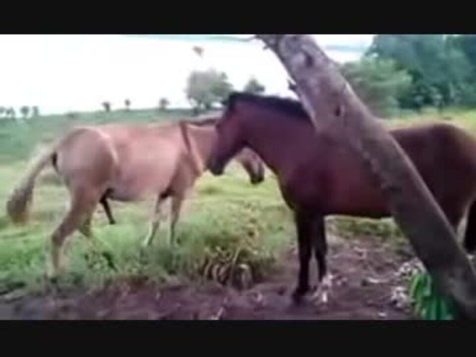 競馬 交尾 馬 の