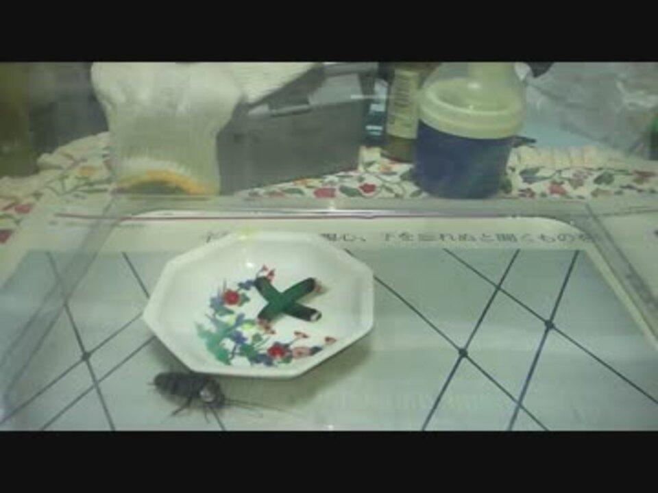 ゴキブリ 蚊取り線香