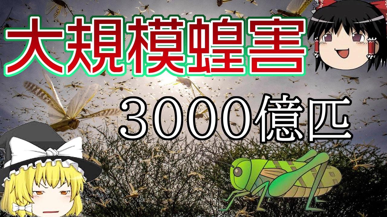 発生 中国 バッタ 大量