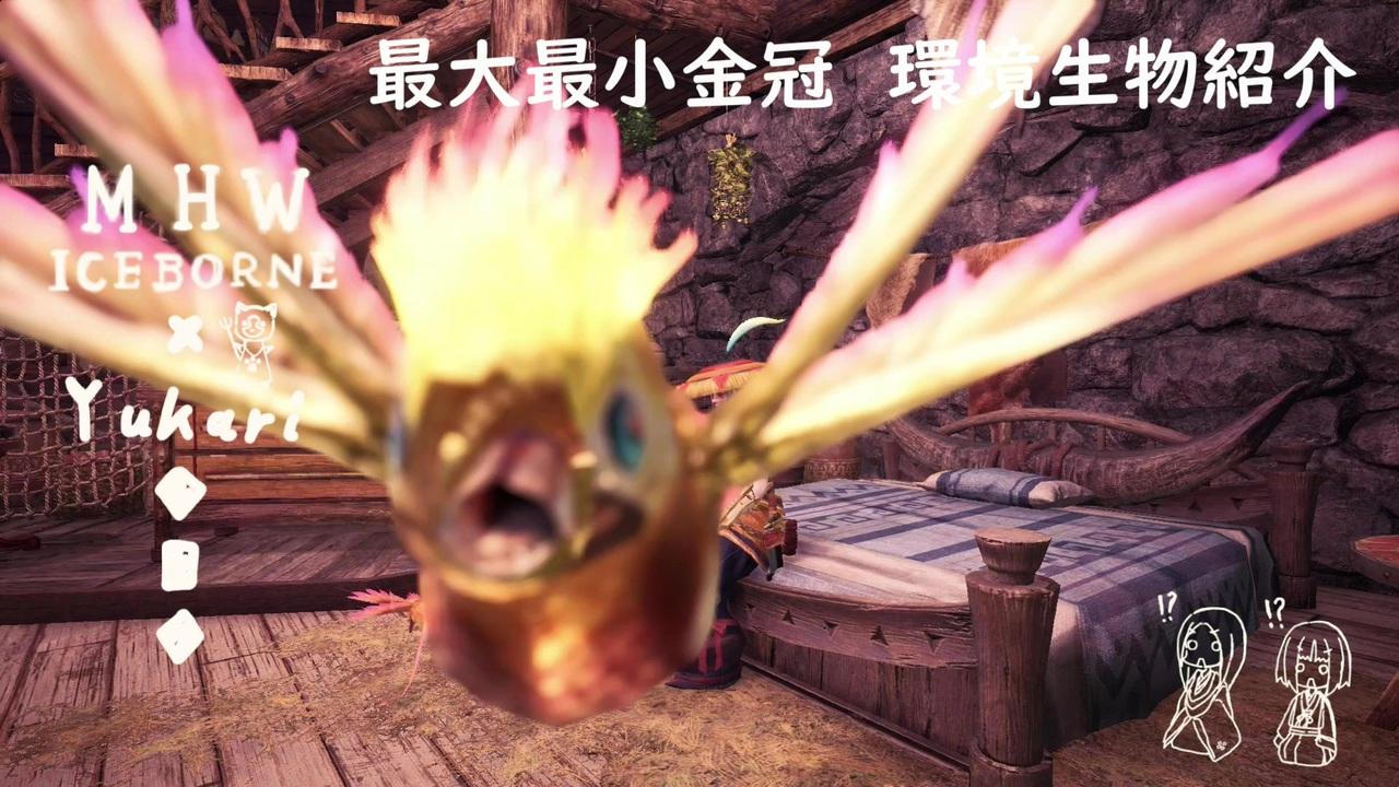 ドリ タキシード 金冠 サンゴ